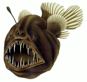 The humpback anglerfish.