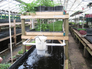 Commercial aquaponics system. - Image CC-SA 2.0 Generic by ryan griffis, Growing Power, Milwaukee.