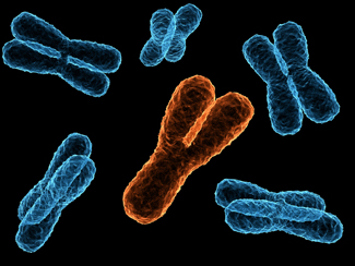 sex chromosomes for male and female