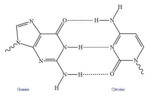Hydrogen Bonding - PD Wikimedia Commons by Isilanes