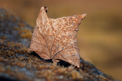 leaves alive