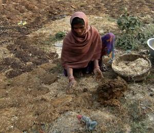 Preparing Komaya (cow) dung for fuel.