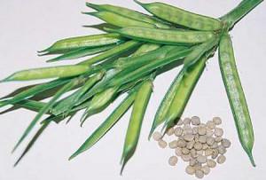 Guar Gum (Beans)