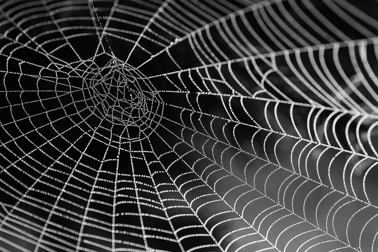 spider silk and cocoon silk