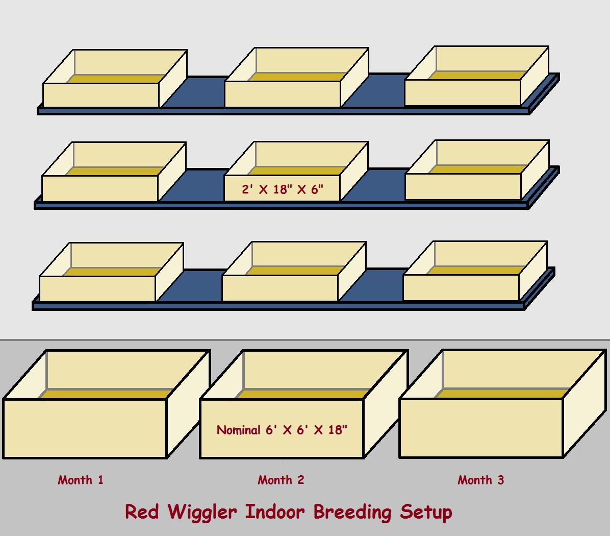red wiggler