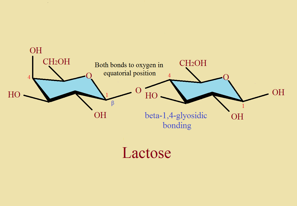 tear ingredient lysozyme