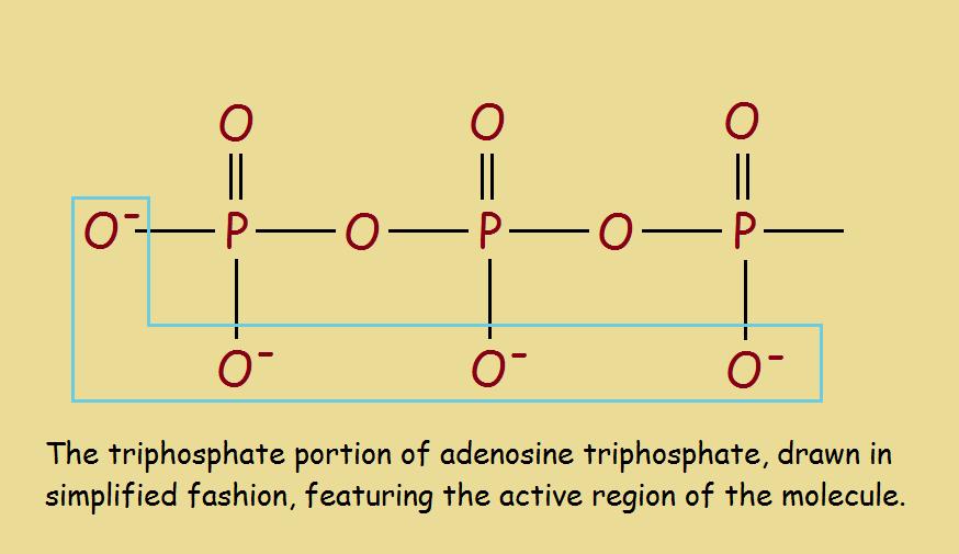 phosphoryl groups