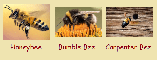 honey, bumble and carpenter bees.